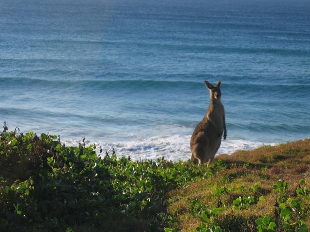 australia 2006 (1)